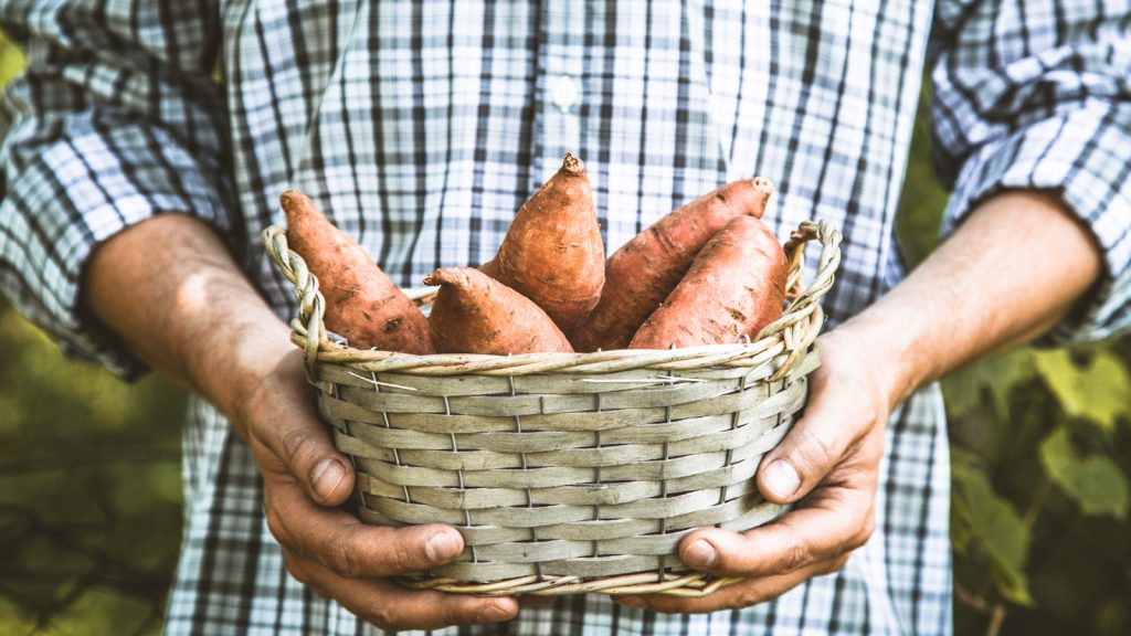 công dụng của việc ăn khoai lang